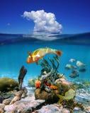 与云彩的水线和海洋生物在海 免版税库存照片
