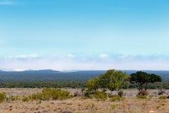与云彩的Addo风景 免版税库存照片