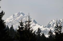与云杉的树梢的斯诺伊高山峰顶在前景 库存图片