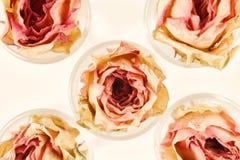 与五朵干燥桃红色玫瑰的花卉背景 库存照片