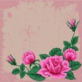 与五片桃红色玫瑰和叶子的美丽的花束 植物布置 免版税库存图片