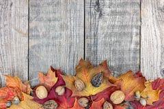 与五颜六色的充满活力的秋天槭树的灰色木背景离开 免版税图库摄影