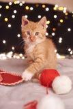 与五颜六色的光一只逗人喜爱的姜猫的圣诞节图片在背景的 免版税图库摄影