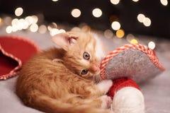 与五颜六色的光一只逗人喜爱的姜猫的圣诞节图片在背景的 免版税库存图片