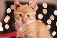 与五颜六色的光一只逗人喜爱的姜猫的圣诞节图片在背景的 库存照片