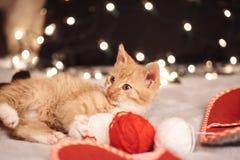 与五颜六色的光一只逗人喜爱的姜猫的圣诞节图片在背景的 图库摄影