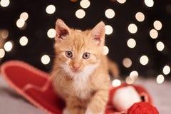 与五颜六色的光一只逗人喜爱的姜猫的圣诞节图片在背景的 免版税库存照片