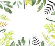 与五颜六色的叶子和分支的水彩框架 向量例证