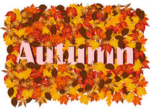 与五颜六色的叶子和词秋天的秋天背景 皇族释放例证