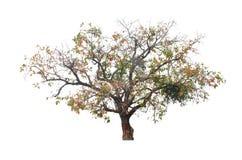 与五颜六色的叶子的大灌木 免版税图库摄影