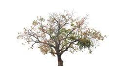 与五颜六色的叶子的大灌木 库存图片