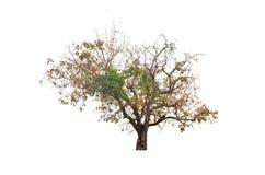 与五颜六色的叶子的大灌木 图库摄影