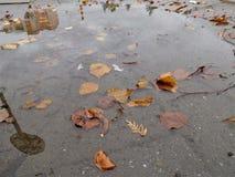 与五颜六色的叶子的水坑在边路 免版税库存照片