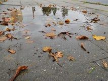 与五颜六色的叶子的水坑在边路 免版税库存图片
