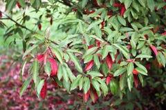 与五颜六色的叶子的秋天在植物园 图库摄影
