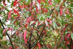与五颜六色的叶子的秋天在植物园 库存照片