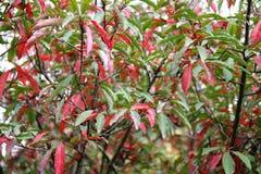 与五颜六色的叶子的秋天在植物园 免版税库存图片