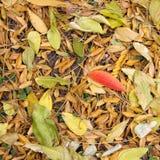 与五颜六色的叶子的秋天在植物园 免版税库存照片