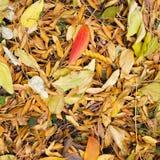 与五颜六色的叶子的秋天在植物园 库存图片