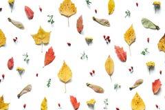 与五颜六色的叶子的秋天样式 免版税库存图片