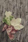 与五颜六色的叶子的秋天模板在木背景 免版税图库摄影