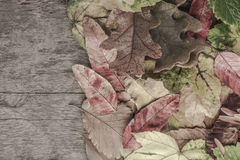 与五颜六色的叶子的秋天模板在木背景 库存图片