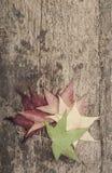与五颜六色的叶子的秋天模板木表面上 库存图片