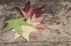 与五颜六色的叶子的秋天模板木表面上 免版税库存照片