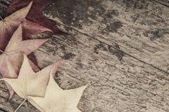 与五颜六色的叶子的秋天模板木表面上 图库摄影