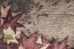 与五颜六色的叶子的秋天模板木表面上 免版税库存图片