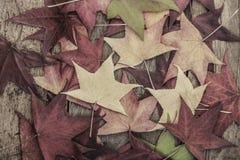 与五颜六色的叶子的秋天模板 免版税库存图片