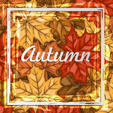 与五颜六色的叶子的秋天横幅 查出的秋天美好的框架离开实际白色 免版税库存照片