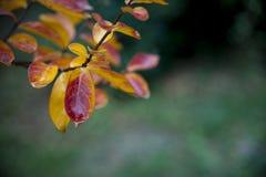 与五颜六色的叶子的秋天背景 库存图片