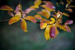 与五颜六色的叶子的秋天背景 图库摄影
