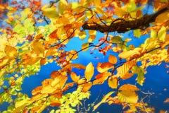 与五颜六色的叶子的秋天背景 库存照片