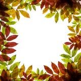 与五颜六色的叶子的秋季文本的背景和地方 免版税库存照片