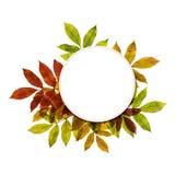 与五颜六色的叶子的秋季背景 免版税库存图片
