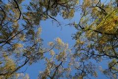 与五颜六色的叶子的许多柳树在秋天 库存照片