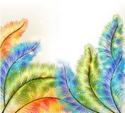 与五颜六色的向量蕨的抽象清楚的背景 图库摄影