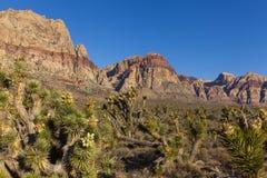 与五颜六色的山和Joshus树的美好的沙漠场面。 库存照片