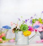 与五颜六色的庭院的喷壶在桌,正面图上开花,从事园艺 库存图片