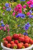 与五颜六色的庭院礼物、莓果和花的夏天心情 库存图片