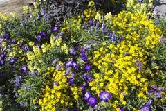 与五颜六色的开花的狂放的春天花的领域 免版税库存图片