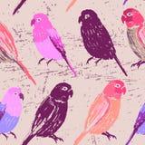 与五颜六色的手拉的鹦鹉的无缝的样式 免版税库存图片