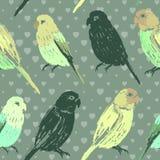 与五颜六色的手拉的鹦鹉的无缝的样式 免版税图库摄影