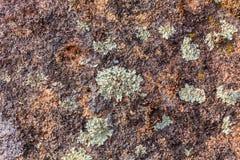 与五颜六色的斑点和地衣的石纹理特写镜头 免版税图库摄影