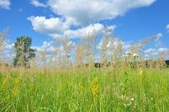 与五颜六色的明亮的草地早熟禾的背景有蓝天和云彩背景 草甸由草和wildflow组成 库存照片