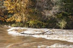 与五颜六色的树和河急流的秋天风景在阳光下 库存图片