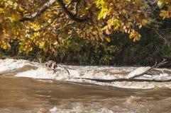 与五颜六色的树和河急流的秋天风景在阳光下 图库摄影