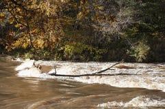 与五颜六色的树和河急流的秋天风景在阳光下 库存照片